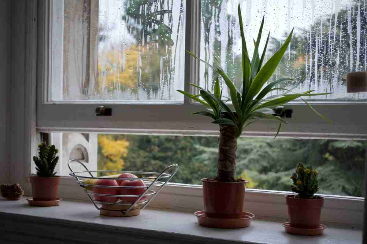 opening window to reduce condensation